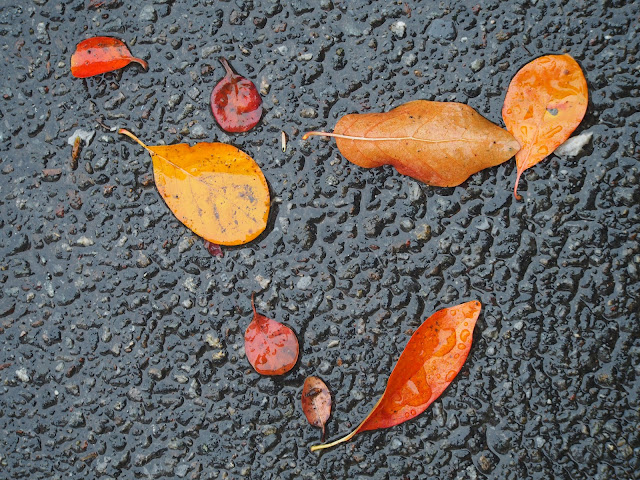 Triangle #triangle  #fall #fallincentralpark #leaves #foliage #fallenleaves #rainyday #nyc 2014