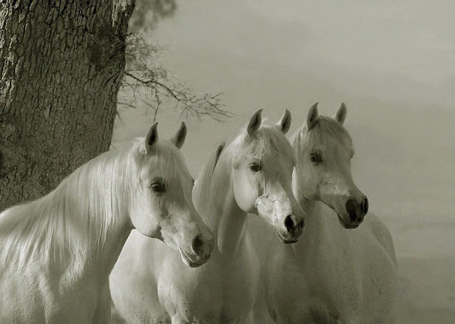 Horses Wallpapers for Windows 8 | Windows 8 Wallpapers Images Themes