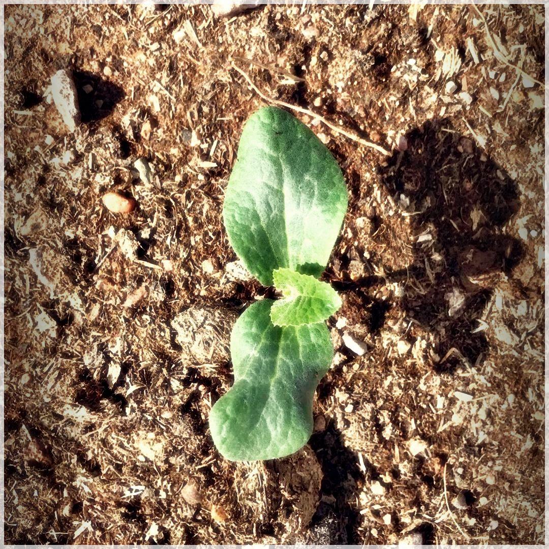 GrowSomething-32315046027