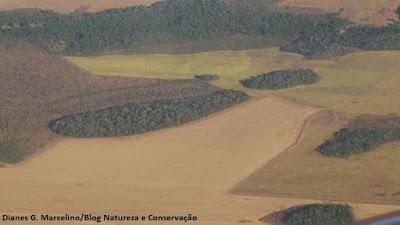 Desmatamento, APA do Lago de Palmas, biodiversidade, aves do Tocantins, aves do cerrado, mamíferos, plantas, lago de Palmas, perda de habitat, extinção, naturatins, aves ameaçadas de extinção, biologia, ecologia, meio ambiente, animais, animal, natureza