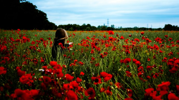 Wallpaper 2: Girl in the Field with Red Poppies
