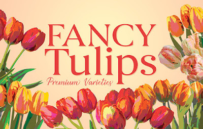 Fancy Tulips from sun Valley