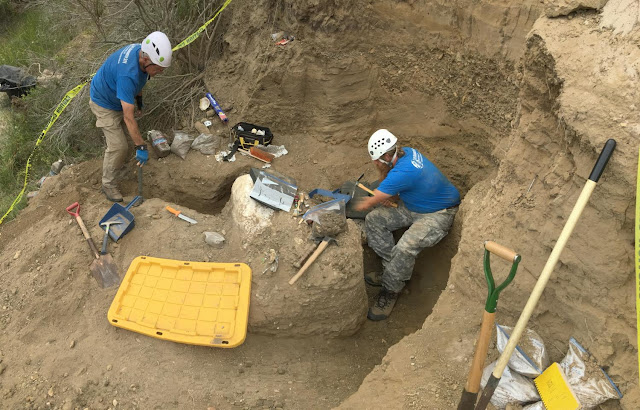 Rare mammoth fossil excavated at Channel Islands National Park
