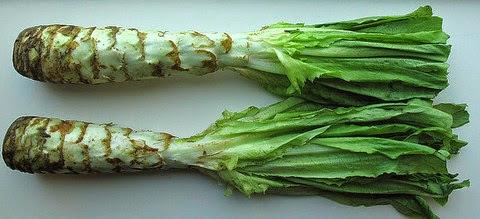 Celtuce Lettuce
