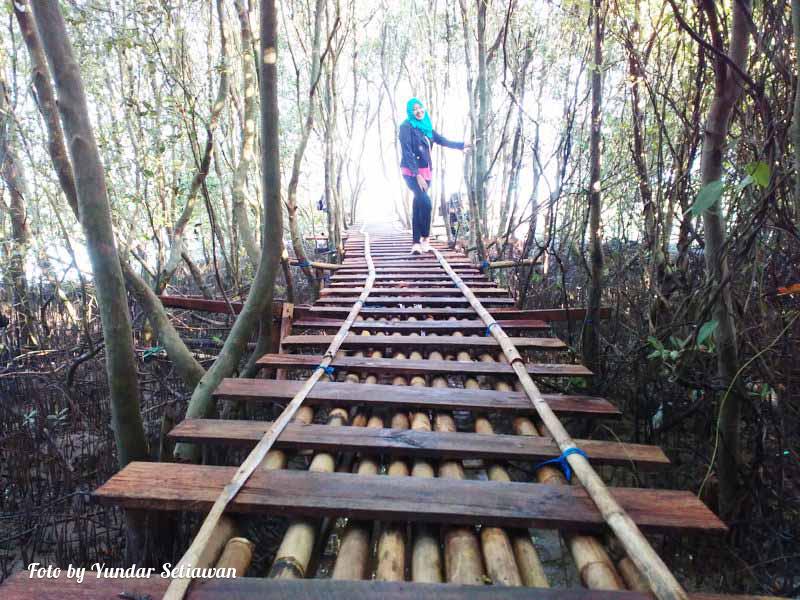 Obyek Wisata Alam Hutan Mangrove Temon Kulon Progo Mas Yundar