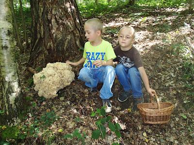 grzyby we wrześniu, pierwsze grzyby września, grzyby 2016, grzybobrania 2016, grzyby w okolicach Krakowa, siedzuń sosnowy, szmaciak gałęzisty, Sparassis crispa, co zrobić ze szmaciaka, potrawy ze szmaciaków, jak przyrządzić szmaciaka