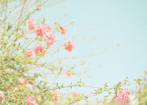 beautiful cute flower flowers igottapeenowtumblrcom pink Favimcom 107586