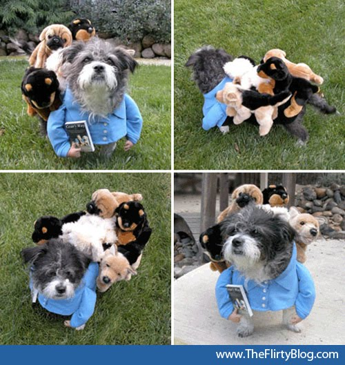 31 dog halloween costumes that will make you smile instead of scream a diy dog whisperer dog halloween costume solutioingenieria Image collections
