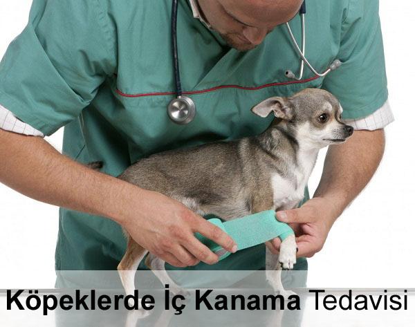 Köpeklerde İç Kanama Tedavisi
