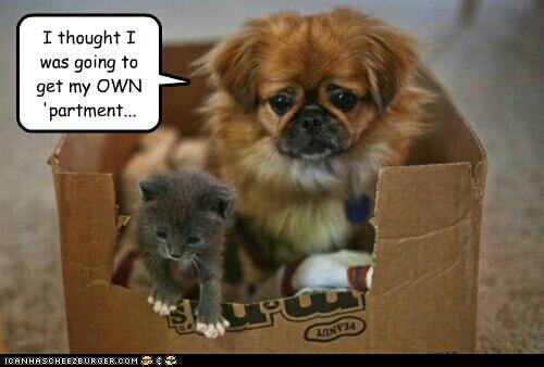 funny puppies and kittens - photo #13