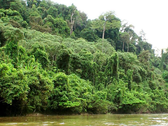 indonesia exotict: menghindari kebakaran hutan