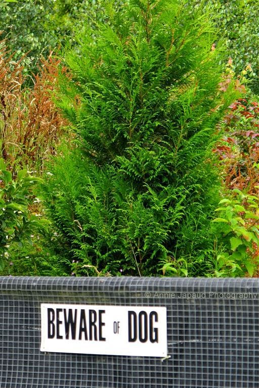 sign: beware of dog on a fence