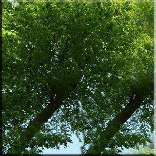 AĞAÇLAR, ağaç, yeşil , yaprak, çiçek, faydalar, fayda, zarar, zararlar