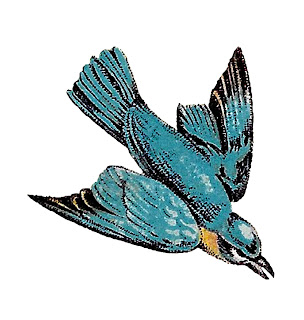 bird flying image transfer illustration clipart digital download