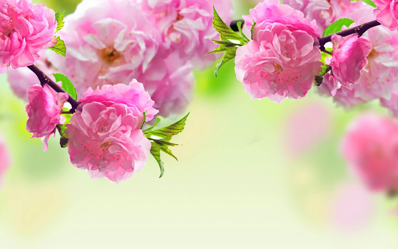 Spring Season 2014 Wallpapers HD Free Download