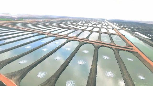 صور وتفاصيل مشروع مزرعة بركة غليون محافظة كفر الشيخ