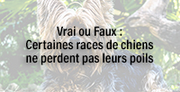 Vrai ou Faux : Certaines races de chiens ne perdent pas leurs poils