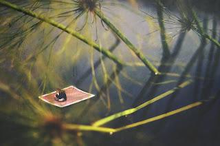 Fotografías de fantasía con gente miniatura.