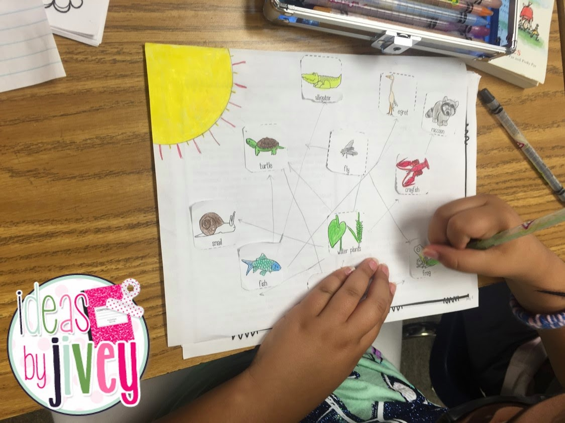Ecosystems Food Webs And Owl Pellets