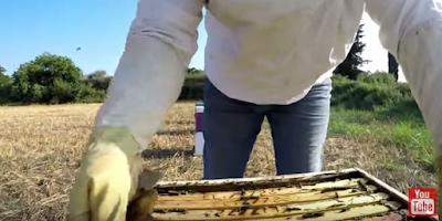 Ένα πολυ όμορφο μελισσοκομικό βιντεάκι