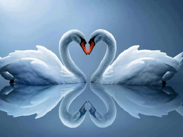 Mensagens De Otimismo Para Compartilhar Piadas Para: Imagens Para Compartilhar Lindas:Piadas Para Facebook