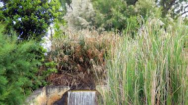 Bosquete en l'Eliana: un jardin en la rotonda
