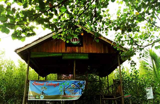 mangrove di mempawah