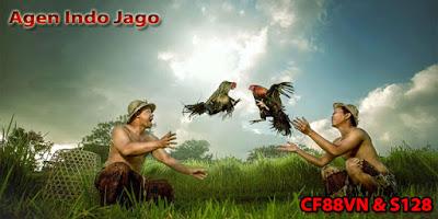 Daftar Indo Jago via Luckybet168.co
