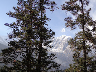 Manaslu trekking photos with Alpine trees