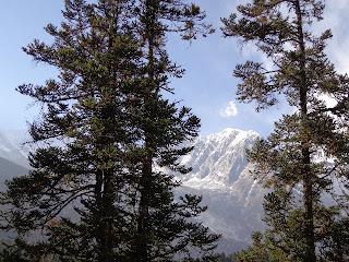 Manaslu trekking photos with Alpine trees