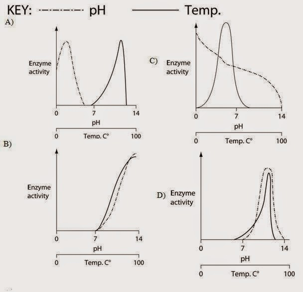 Biologi gonzaga soal bakteri level dasar which of the following graphs most accurately depicts the expected temperature and ph profiles of its enzymes note the horizontal axes of these graphs ccuart Choice Image