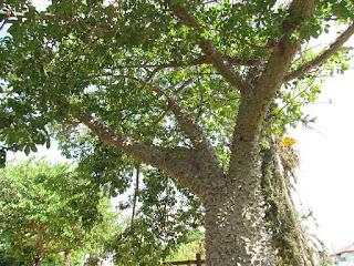 לא תטפסו על העץ הזה