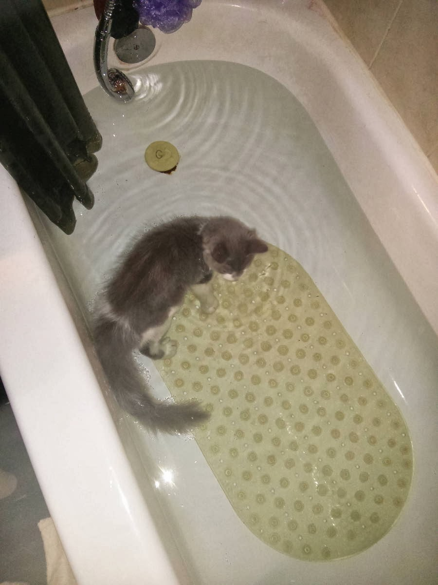 Funny cats - part 93 (40 pics + 10 gifs), cat swimming in the bath tub