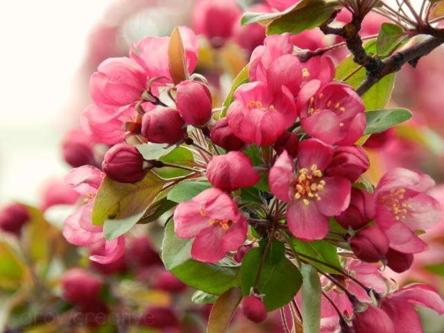 pink blossoms: grow creative blog
