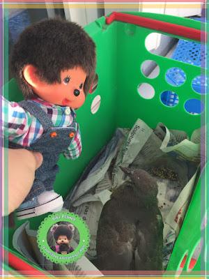 Bubbles le Monchhichi et Colombine le bébé pigeon - oisillon