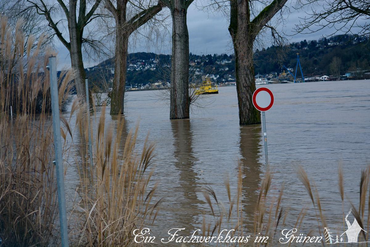 Rolandseck, Hochwasser