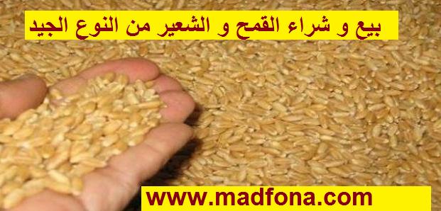 بيع و شراء القمح و الشعير من النوع الجيد بالجملة