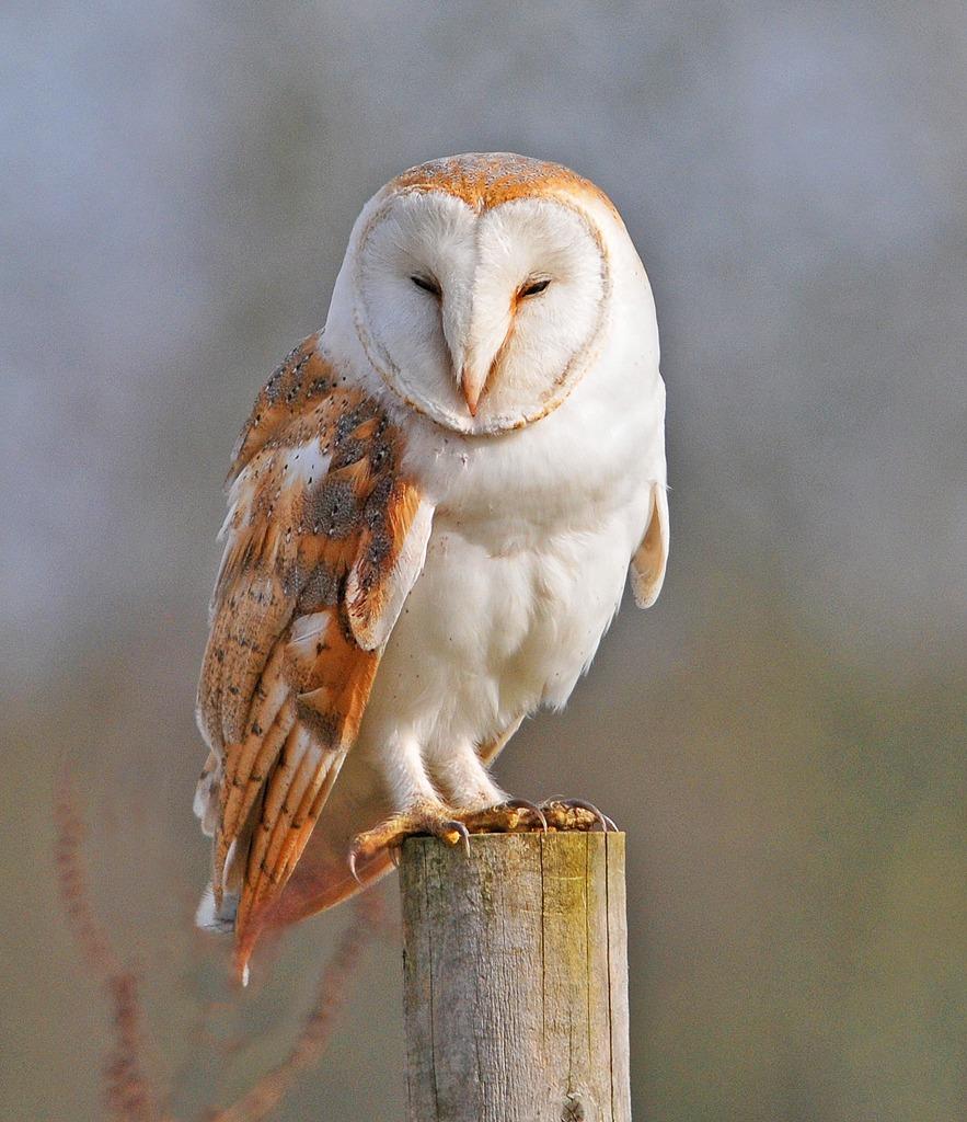 Beauty Of Bird