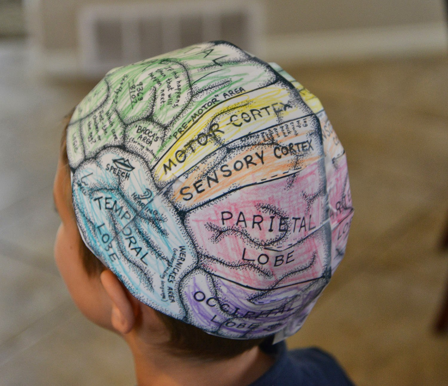 A school of fish brain hats cerebral cortex for Brain hat template