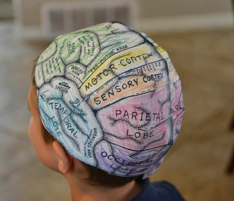 A School Of Fish Brain Hats Cerebral Cortex