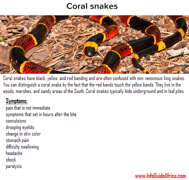 Description And Symptoms Of Coral Snakes