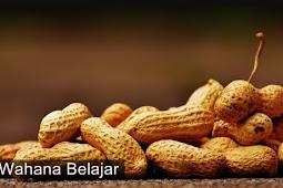 Ini Dia 3 Manfaat Makan Kacang Tanah di Musim Hujan