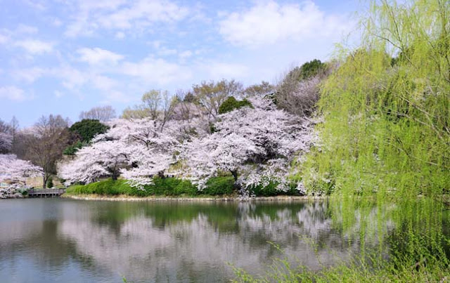 Best Places To See Cherry Blossom In Japan