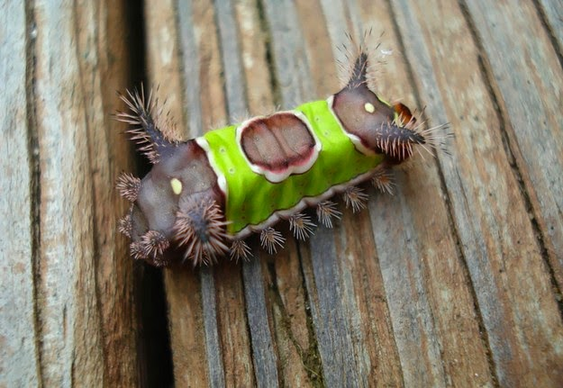 caterpillar-transformation-process-5