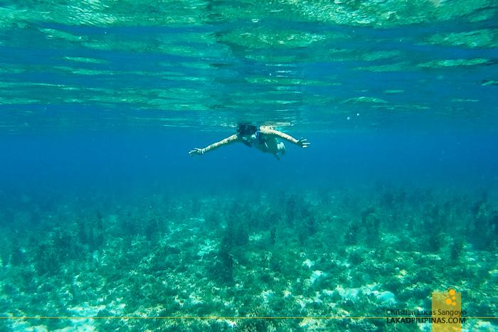 Carabao Island Romblon Snorkeling