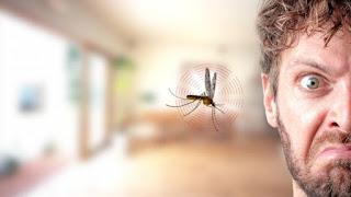Ternyata Inilah Tipe Orang Yang Paling Disukai Oleh Nyamuk