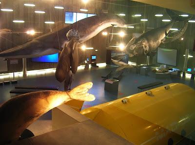 Museo de la Ballena,Caniçal, Madeira, Portugal, La vuelta al mundo de Asun y Ricardo, round the world, mundoporlibre.com
