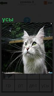 Серая кошка сидит с большими усами и смотрит впереди себя