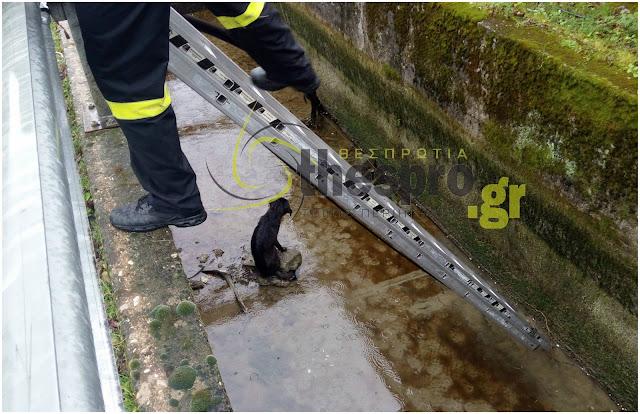 Θεσπρωτία: Επιχείρηση της Πυροσβεστικής για τον απεγκλωβισμό σκύλου που έπεσε σε φρεάτιο (+ΒΙΝΤΕΟ)