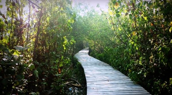 foto hutan mangrov wonorejo